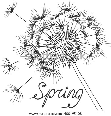 Spring background with blossom dandelions on white. - stock vector