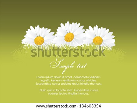 Spring background with camomile