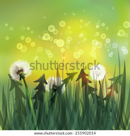 Spring background with white dandelions. Vector illustration - stock vector