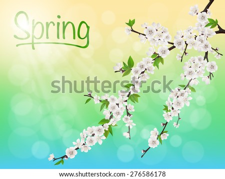 Spring blooming cherry branch with white flowers on background sky and sun rays. With sample text. - stock vector