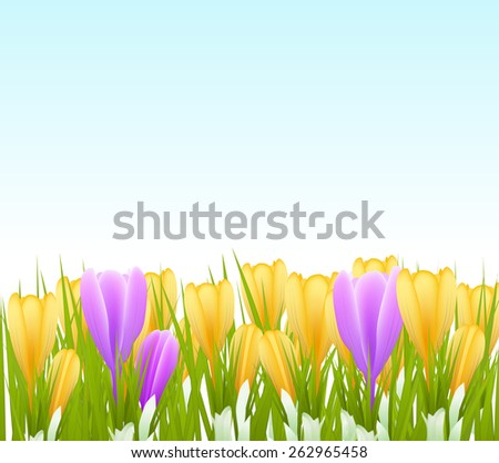 spring crocus flowers background. vector illustration - stock vector