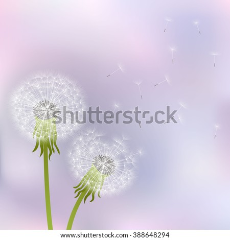 Spring dandelion flowers  on a gray-pink background. - stock vector