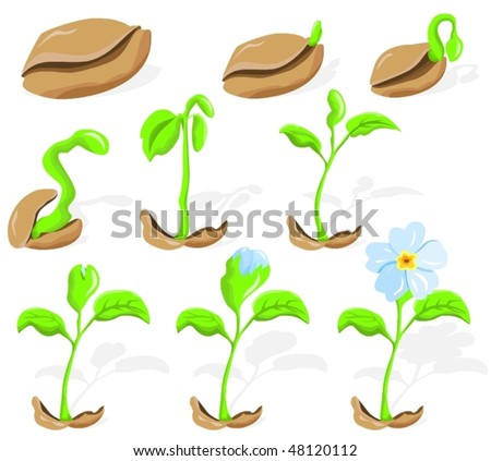 Spring flower, seed sprouting growth (applicable to key-frames for animation, for example...) - stock vector
