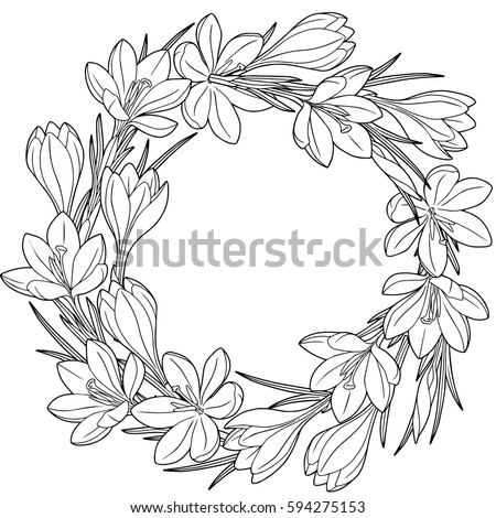 Spring Flower Wreath Of Crocuses Vector Isolated Elements Black And White Image For Adult