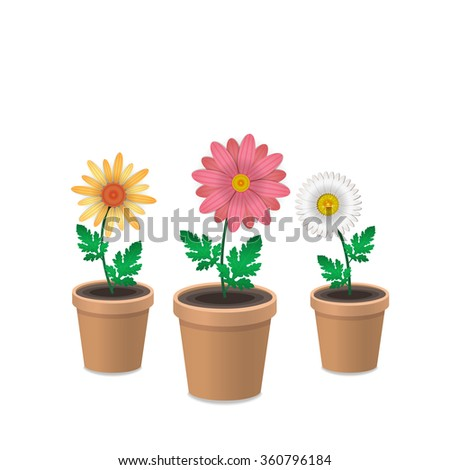 Spring flowers in plant pots. Isolated on white background. Daisies, camomille. Vector illustration.