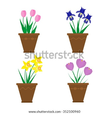 Spring flowers in pots isolated on white background. Irises, crocuses, narcissus, tulips.