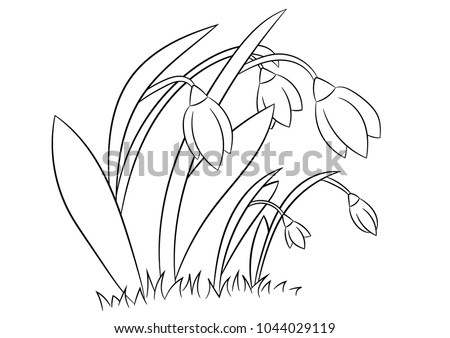 snowdrop coloring pages - spring flowers snowdrops coloring page book stock vector