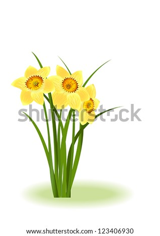 Spring Flowers. Yellow narcissus on white background with space for your text. Vector eps10 illustration. Raster file included in portfolio - stock vector