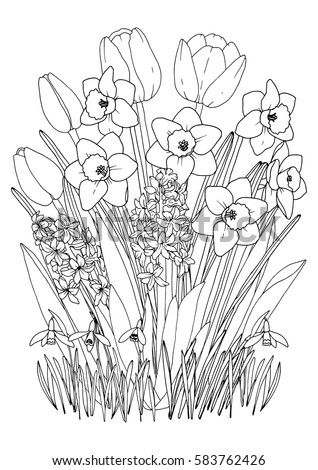 Spring Garden Flowers Coloring Page With Daffodils Tulips Hyacinth And Snowdrops Printable A4