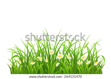 Spring green grass and daisies on white background - stock vector