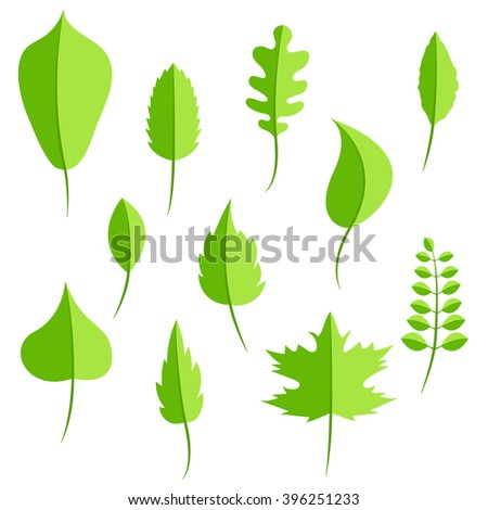 Spring green leaves in flat style vector set. Oak leaf, chestnut leaf, maple, birch and acacia leaves.