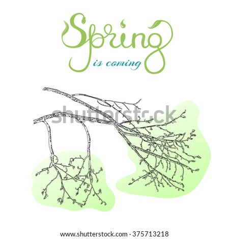 Spring is coming Original handwritten word spring. Lettering. Vector hand drawn sketch illustration of tree's branch in spring.EPS 10 vector stock illustration.  - stock vector