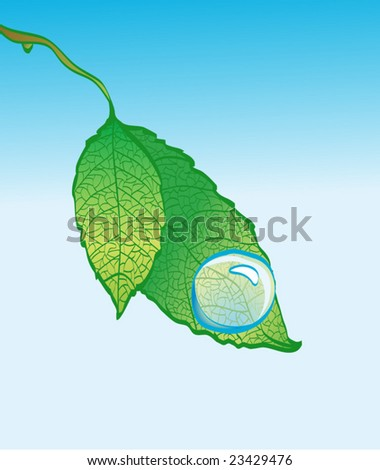 Spring leaf with drop of water