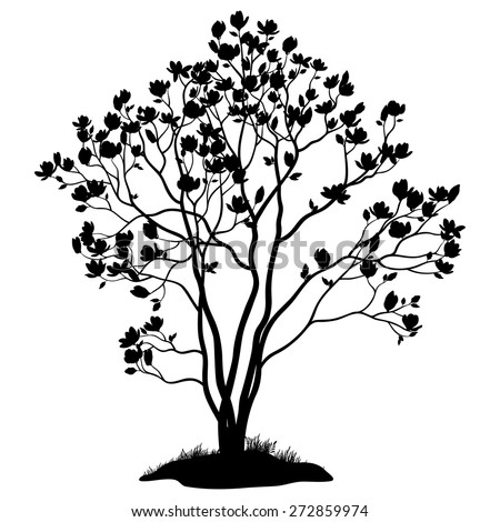 Spring Magnolia Tree with Flowers, Leaves and Grass Black Silhouette Isolated on White Background. Vector - stock vector