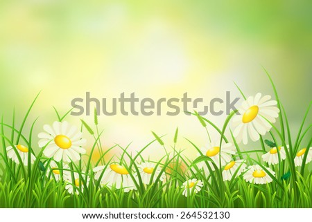 Spring meadow background with green grass and daisies - stock vector