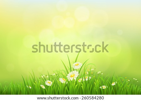 Spring nature background with green grass and daisies