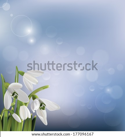 Spring snowdrop flowers on blue background. Vector illustration