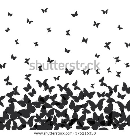 spring summer card design. banner, black butterfly on white background. Vector