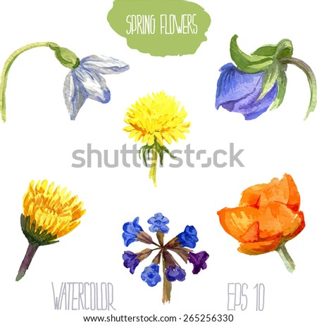 Spring wild flowers. Vector watercolor illustration. - stock vector