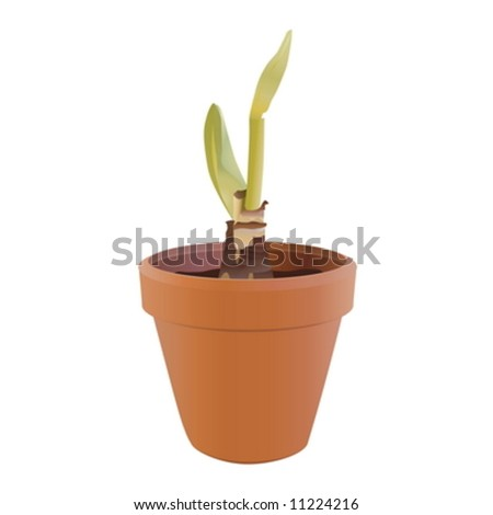 Sprout in a flowerpot on a white background