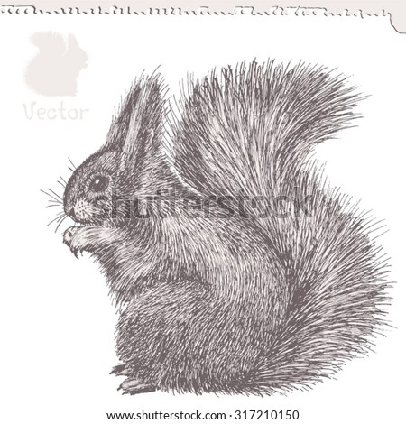 squirrel, hand-drawn ink sketch, vector illustration - stock vector