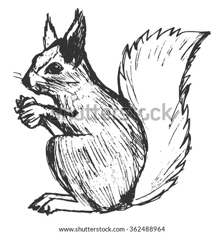squirrel, illustration of wildlife, zoo, wildlife, animal of forest