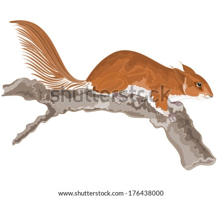 Squirrel on an old tree vector illustration  - stock vector