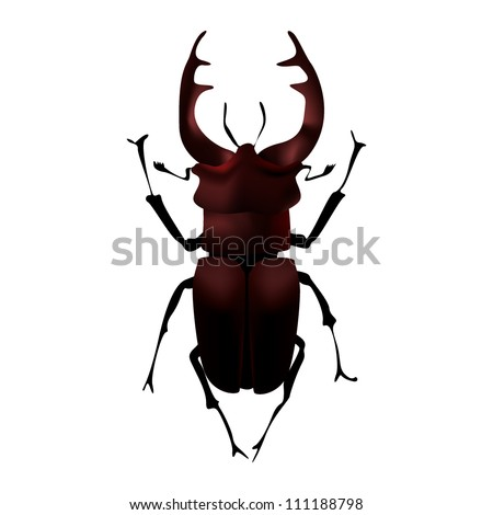 stag beetle collection vector - stock vector