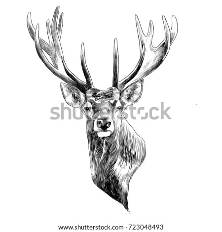 Celtic Shark Tattoo as well Royalty Free Stock Photography Insect Bee Vector Beautiful Exotic Patterned Design Tattoo Image34188347 furthermore Anime Eyes 557848 together with Suesser Weisswal together with Index. on cute horse drawing silhouette