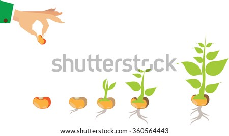 Stages Growth Plant Seed Tree Stock Vector 360564443 ...