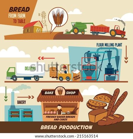 Stages of production of bread. From wheat harvest to freshly baked bread, from farm to table - stock vector