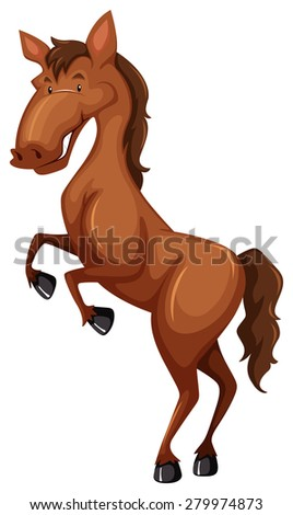 Standing brown horse on white background