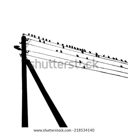 starlings birds on wires. Vector - stock vector