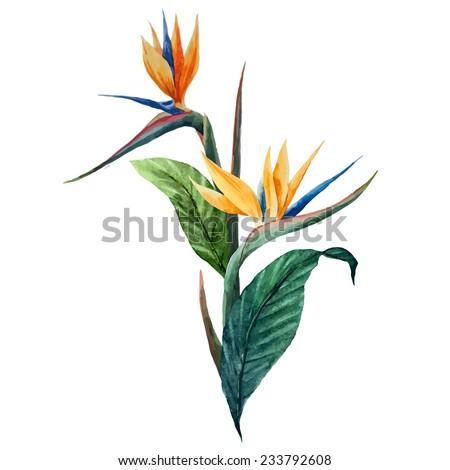 Sterilize, watercolor, vector - stock vector