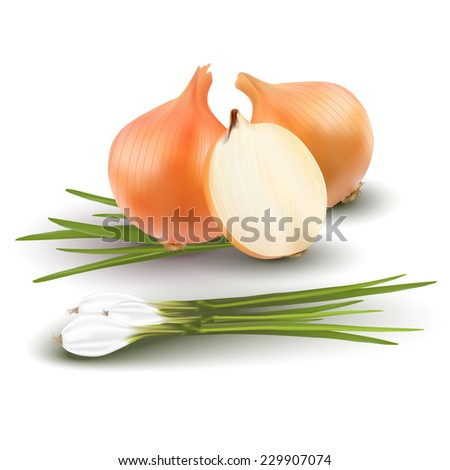 Still life with different types of onion on white background - vector illustration - stock vector