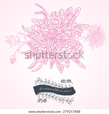 Stock Vector Illustration: set of black and pink isolated vector chrysanthemum flower blossoms. Cool for t-shirts, tattoos and design. - stock vector