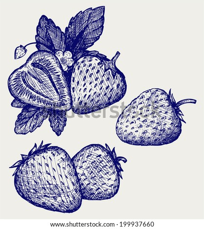 Strawberries with leaves. Doodle style - stock vector