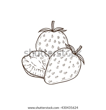 Strawberry hand drawn illustration