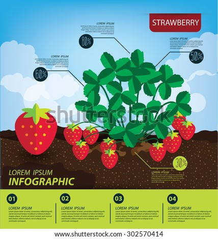 strawberry, infographics. fruits vector illustration. - stock vector