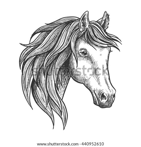 Strongly stallion with thick mane and soft and fluffy ears. Sketched horse for equestrian sport theme