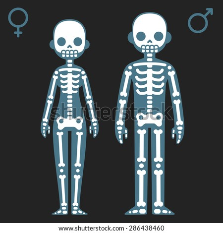 Stylized cartoon male and female skeletons with corresponding gender symbols. - stock vector