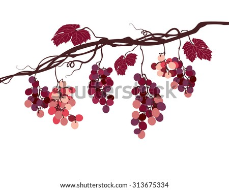 stylized graphic image of a vine with pink grapes - stock vector