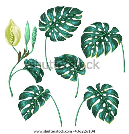 Stylized monstera leaves. Decorative image of tropical foliage and flower. Objects for decoration, design on advertising booklets, banners, flayers.