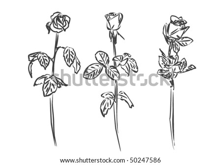 Stylized roses - stock vector