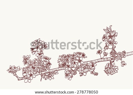 stylized sakura flowers drawing in two colors - stock vector