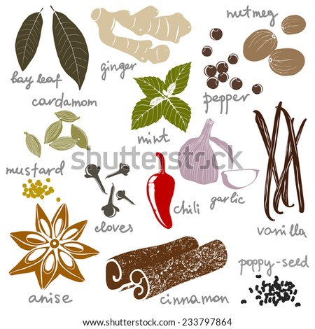 stylized spices set over white background