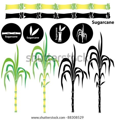 Sugarcane - stock vector