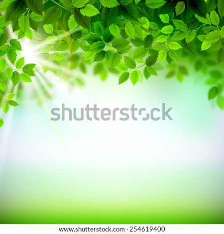 Summer branches with fresh green leaves  - stock vector