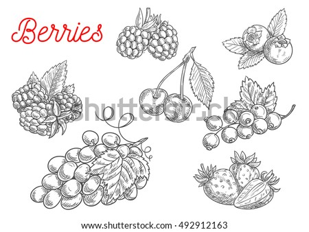 Raspberry Plant Parts also Pruners Sketch Templates in addition Brambles Pruning Training And Growth Characteristics additionally 66516 Product together with Brambles Pruning Training And Growth Characteristics. on prune blackberries raspberries