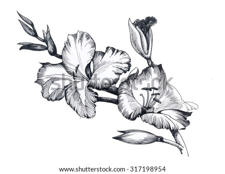 Summer garden blooming flowers, black and white illustration, vector - stock vector
